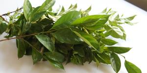 atama-leaves