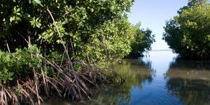 mangrove-swamps