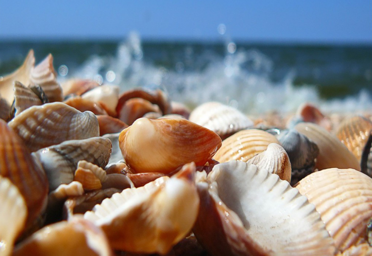 5 Amazing Facts About Seashells | Eko Pearl Towers
